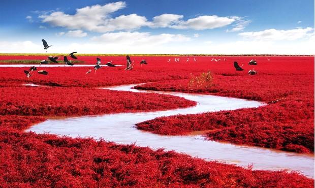 Cervena, Panjin, Κίνα