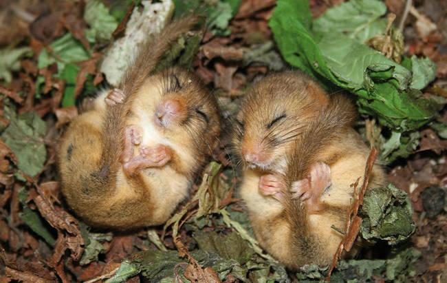 Ποντικάκια1