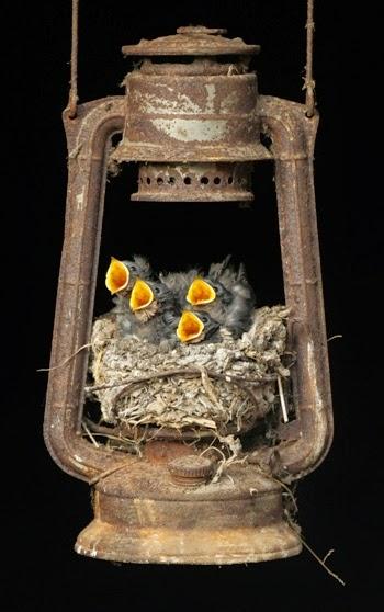 Φωλιά σε λούξ