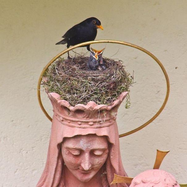Φωλιά σε άγαλμα1