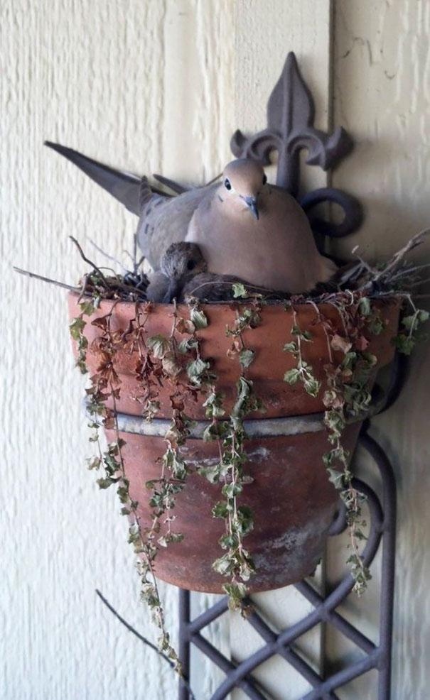 Φωλιά σε γλάστρα1