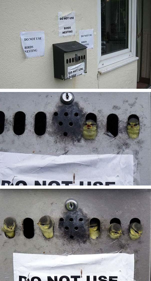Φωλιά σε γραμματοκιβώτιο