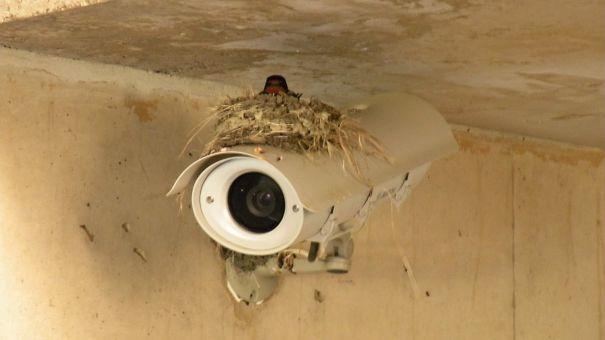 Φωλιά σε κάμερα