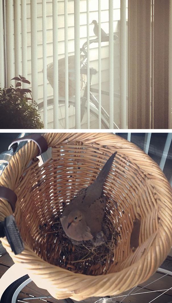 Φωλιά σε καλάθι