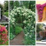 σχέδια εισόδου κήπου