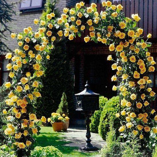 καμάρες κήπου13