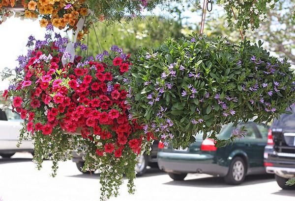 κάθετες ιδέες κηπουρικής33
