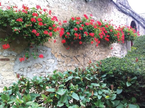 κάθετες ιδέες κηπουρικής36