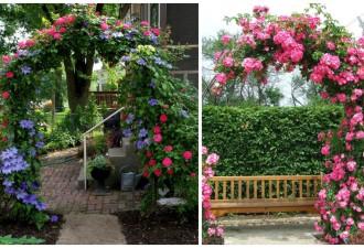 Υπέροχες καμάρες κήπου